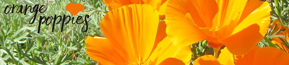 OrangePoppies